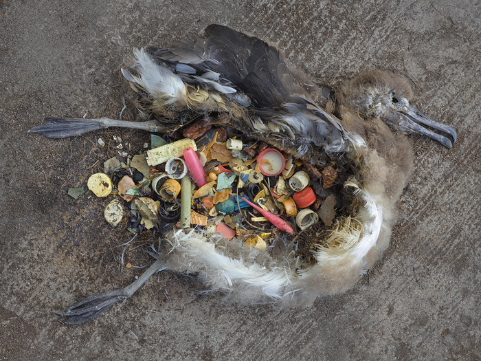 seabird-plastic